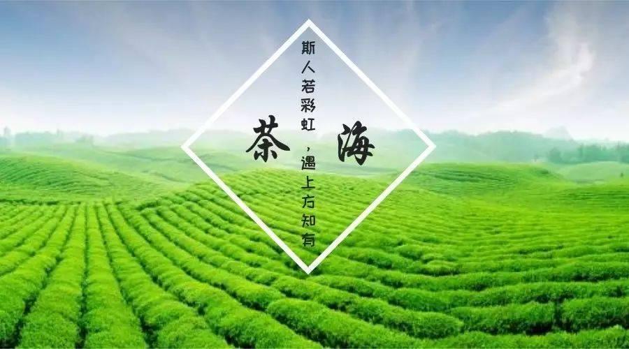 壁纸 成片种植 风景 植物 种植基地 桌面 900_500