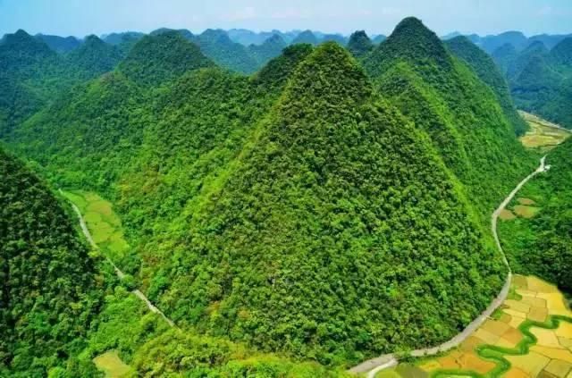 石上森林 -  行走在茂密的原始森林中图片